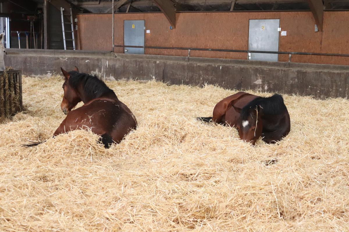 Paardengroep